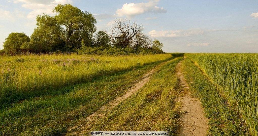 乡间小道 壁纸 小路 草 树木 摄影