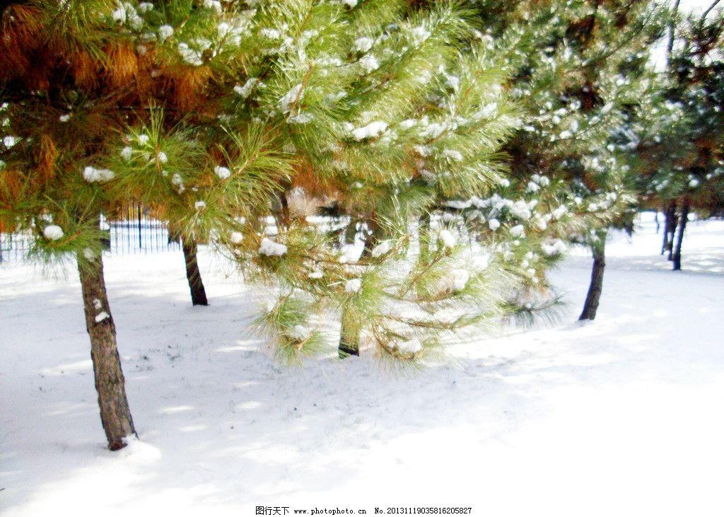 雪景 松树 大雪压青松 雪 摄影 树木树叶 生物世界 96dpi jpg