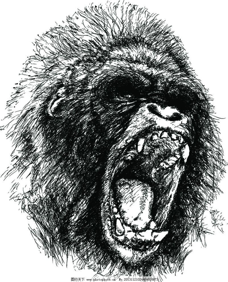 猩猩素材 大猩猩 素描 吼叫 黑白图 矢量图 野生动物 生物世界 矢量 e
