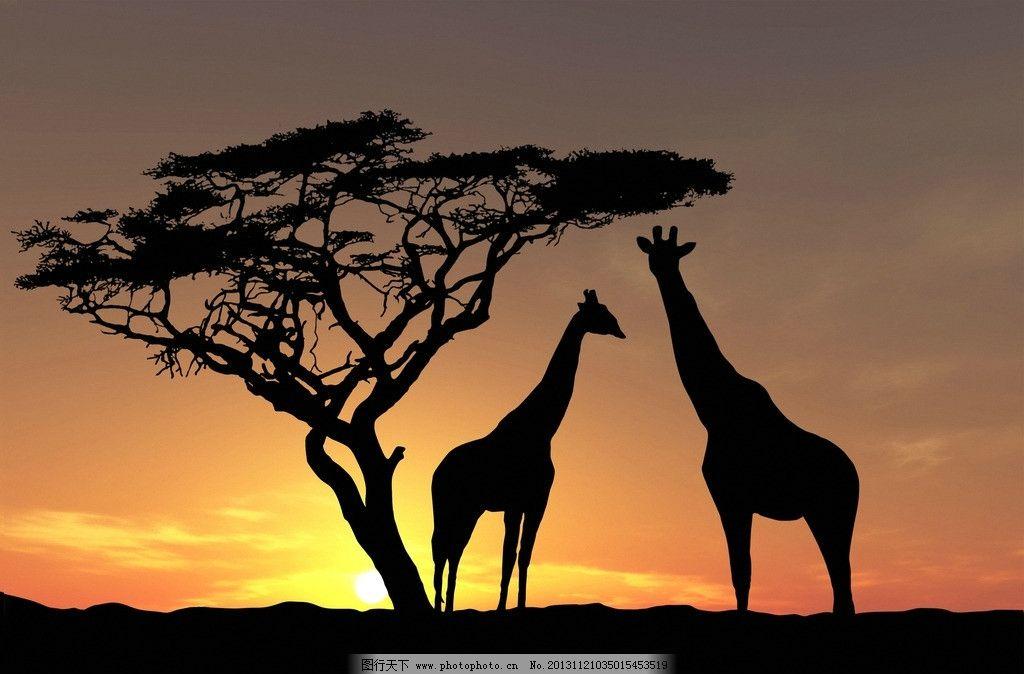 长颈鹿 大树 夕阳 鹿 动物 生物 生物世界 野生动物 摄影 350dpi jpg