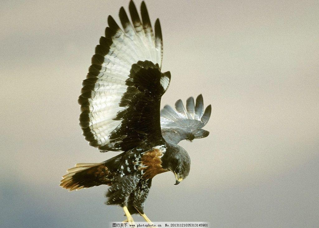 老鹰 动物 鸟类 鸟 树枝