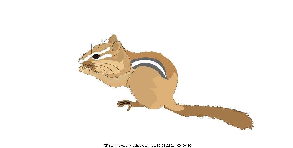 松鼠 矢量 松鼠子 野松鼠 神兽 矢量图 神兽矢量图 野生动物矢量图