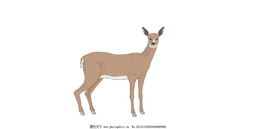 鹿 鹿头 野鹿 母鹿 野生鹿 小鹿 神兽 矢量图 神兽矢量图 野生动物
