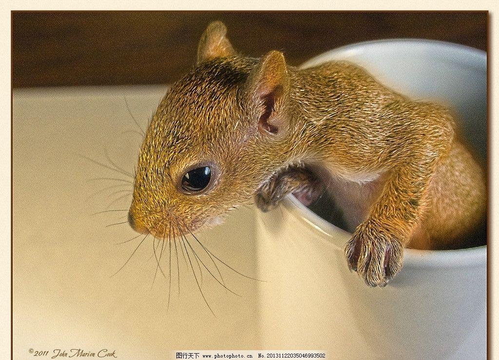 小松鼠 野生 动物 非人工驯养 生物世界 野生动物系列一 野生动物