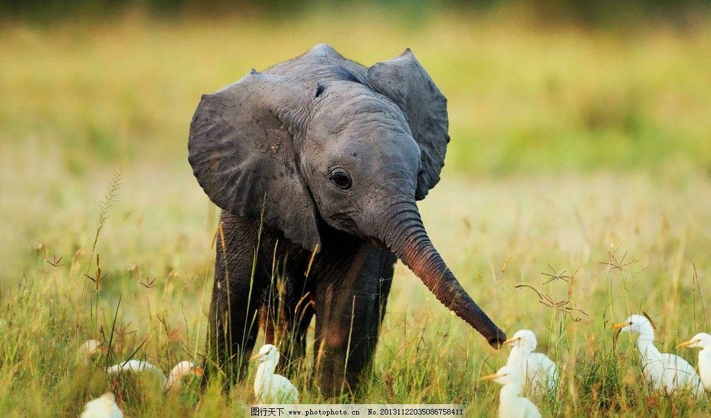 大象图片,小象 动物 生物 生物世界 野生动物 摄影-图