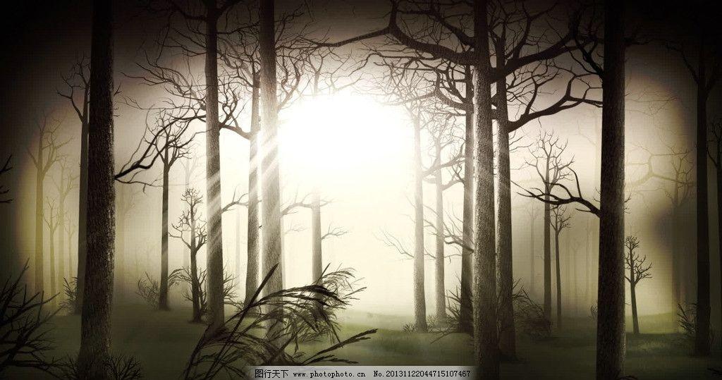 森林视频素材 树林 大树 树木 哥特 黑森林 恐怖 惊悚 晚会片头
