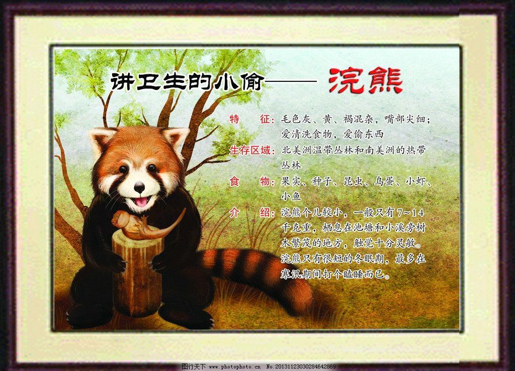 校园文化 哺乳动物 浣熊 讲卫生的小偷 动物介绍 动物 展板模板 广告