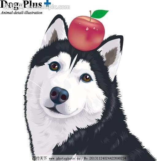 哈士奇 狗 宠物 傻 苹果 dog 伙伴 野生动物 生物世界 矢量 ai