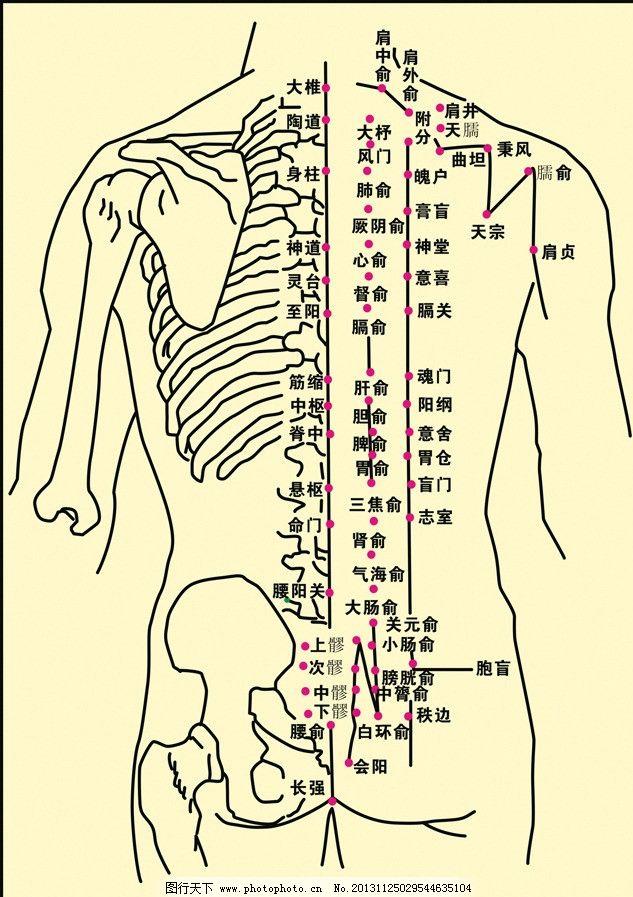 人体背部经络图 背部五行经络图 背部经络图解高清大图