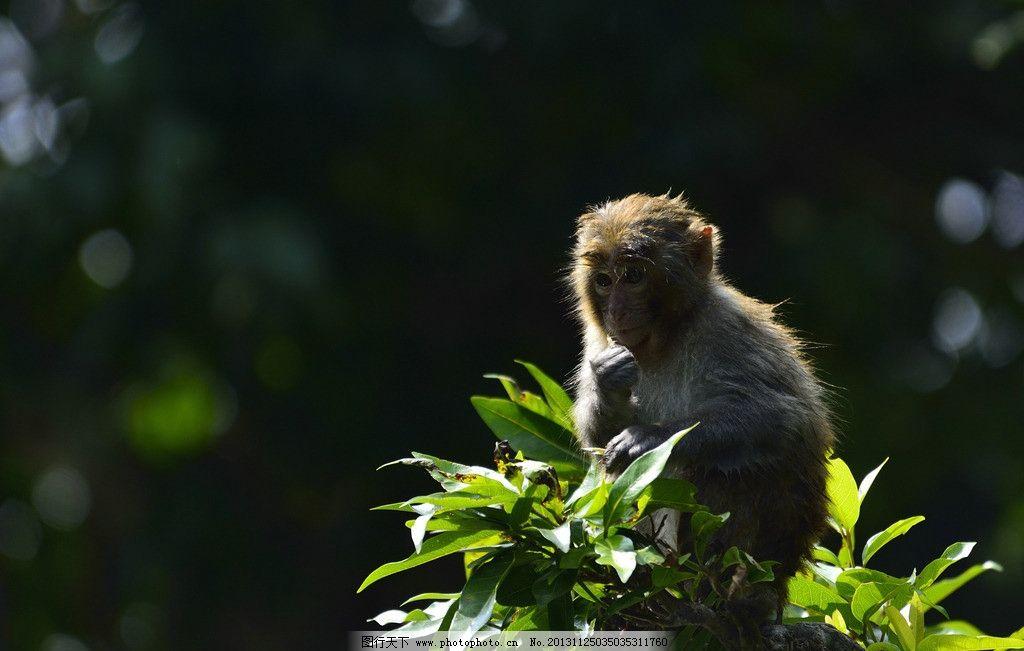 坐在树枝上的小猴子图片