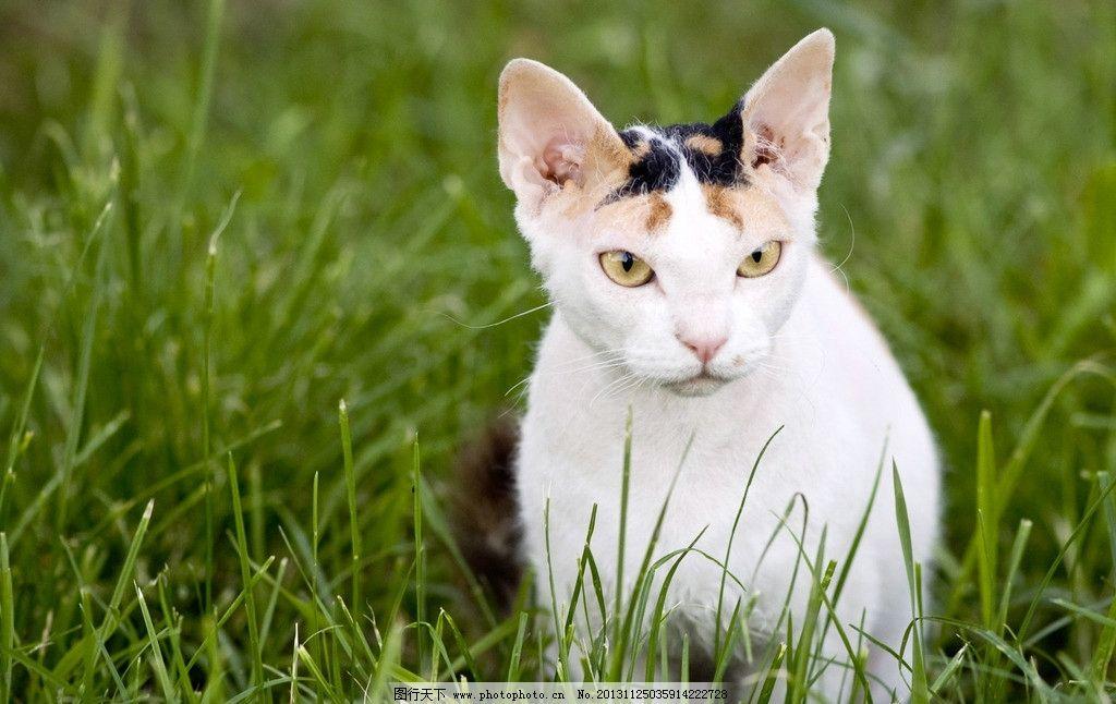 小猫 花猫 猫咪 动物 生物 生物世界 家畜家禽 家禽家畜 摄影 72dpi