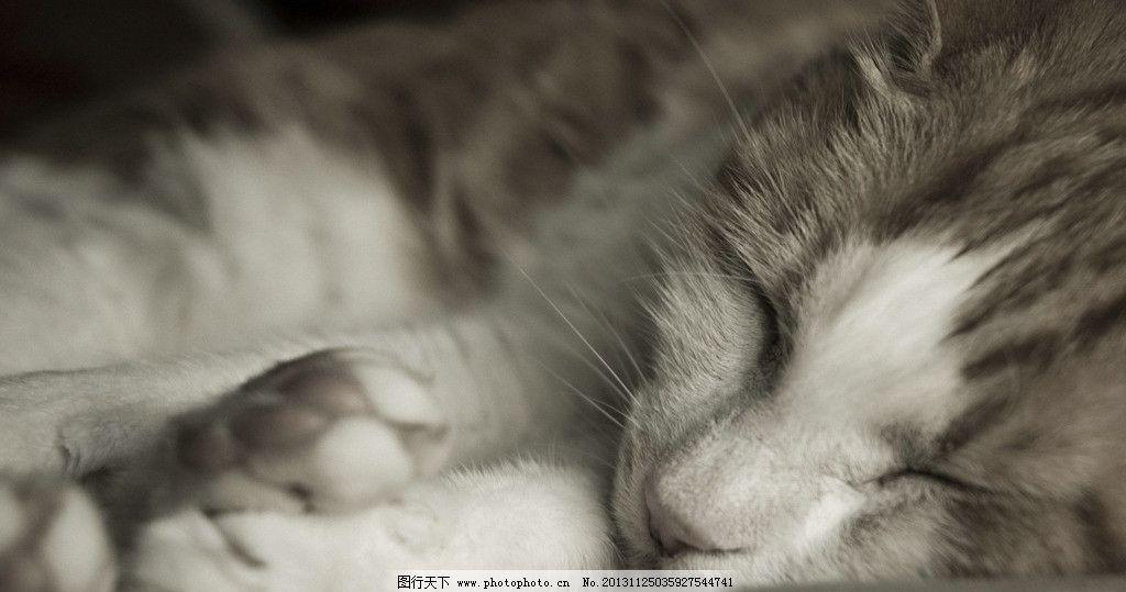 花猫 家猫 懒猫 猫猫 宠物 可爱 睡觉 家禽小动物系列一 家禽家畜