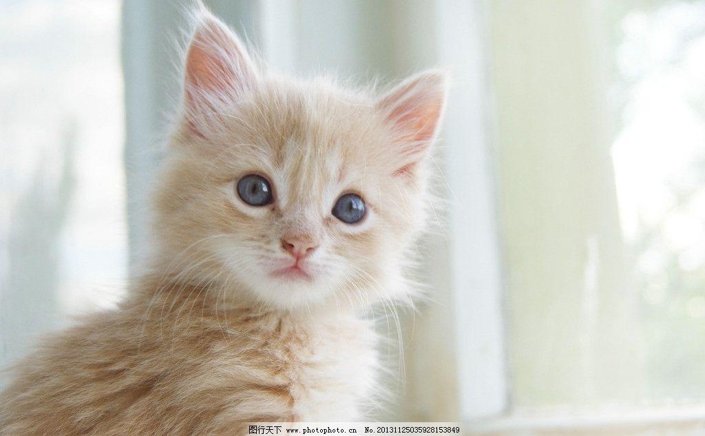 壁纸 动物 猫 猫咪 小猫 桌面 1024_633