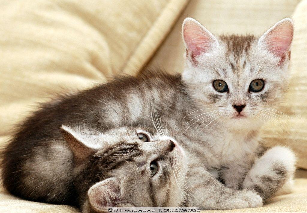 小猫 花猫 猫咪 动物 生物 生物世界 家畜家禽 家禽家畜 摄影 300dpi