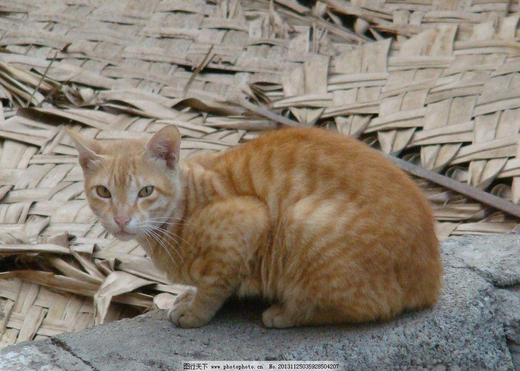 最简单小动物简笔画猫咪
