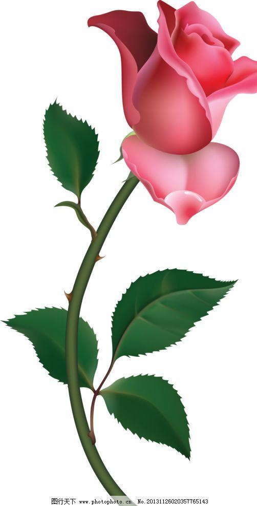 玫瑰 玫瑰移门 玫瑰图案 一枝玫瑰 红玫瑰 花蕾 含苞欲放 手绘花纹