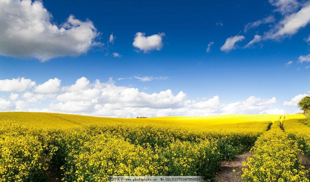 花丛 鲜花 天空 蓝天 白云 云彩 自然 大自然 自然风景 自然景观