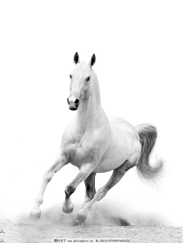 白马的彩铅手绘