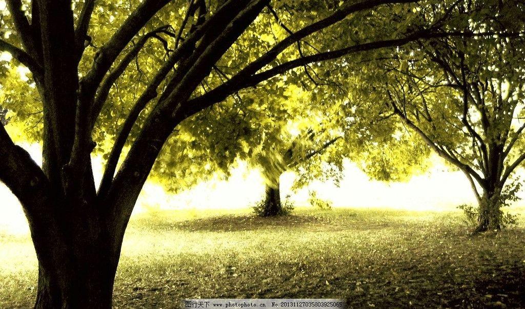 公园树林景观