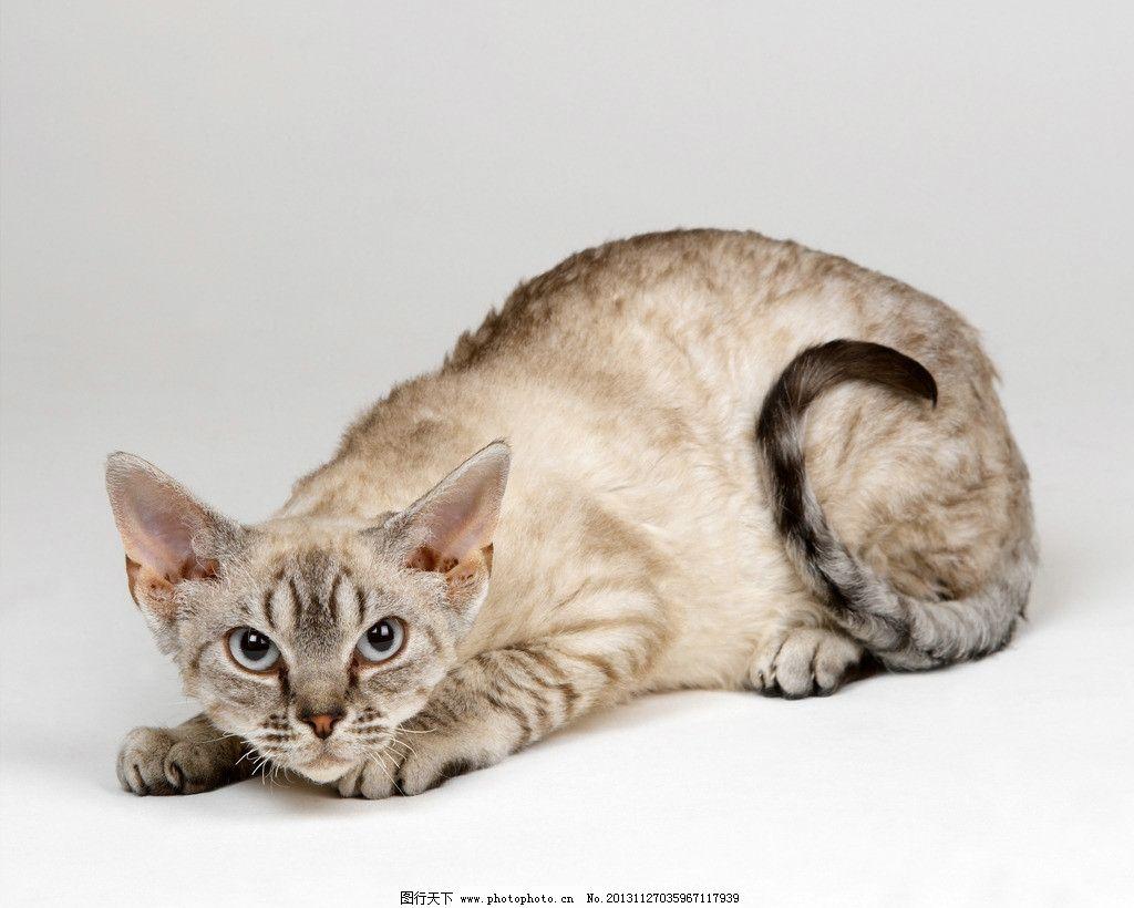 壁纸 动物 猫 猫咪 小猫 桌面 1024_820