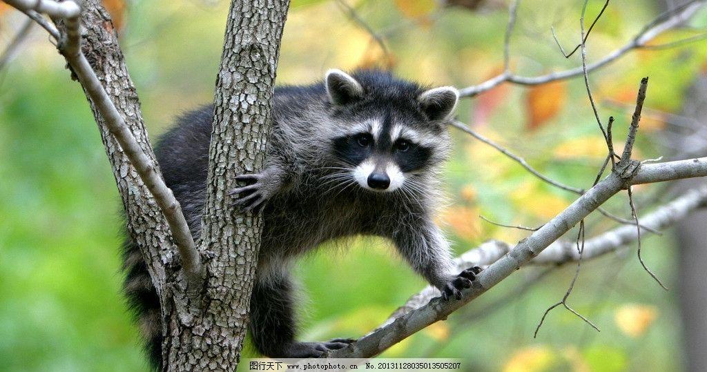 树懒图片_野生动物_生物世界