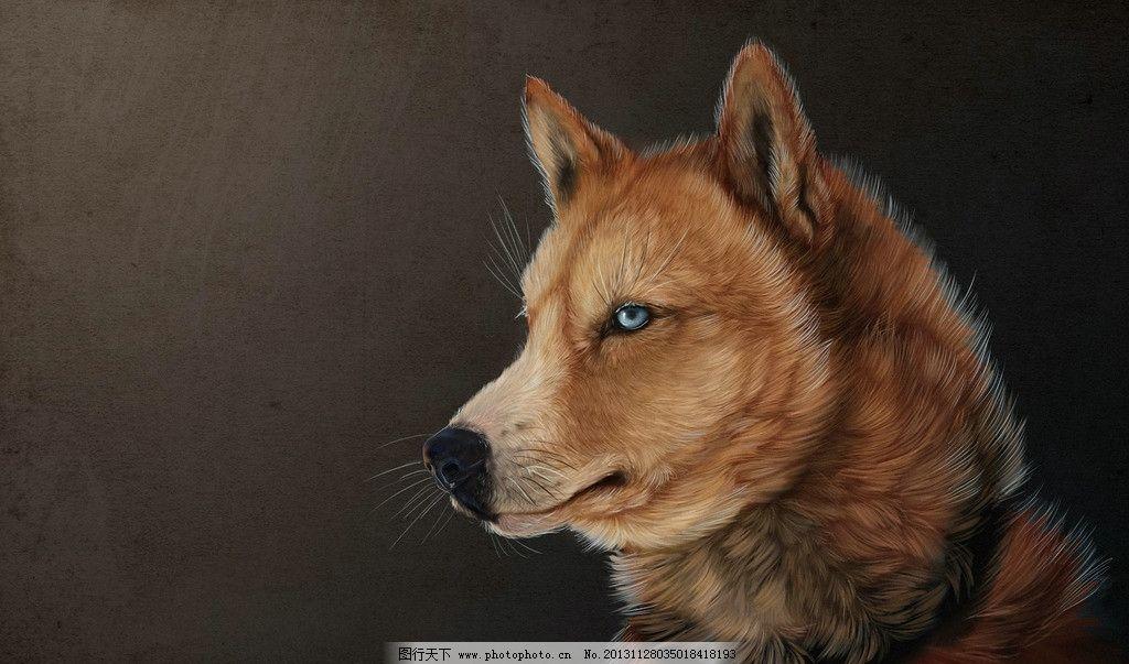 野狼图片,濒危野生动物 有益野生动物 珍惜动物 稀有
