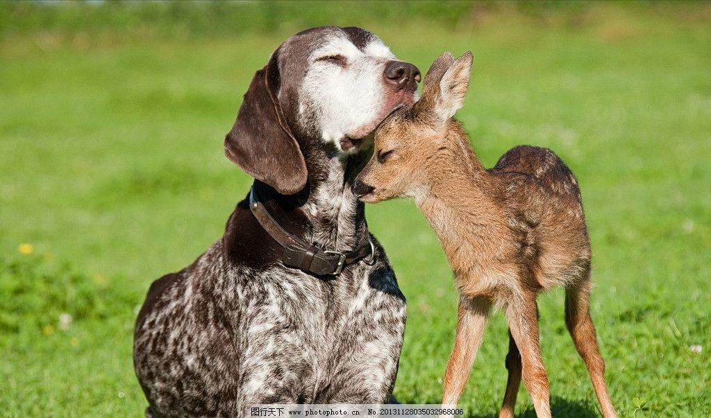 小鹿 濒危野生动物 有益野生动物 珍惜动物 稀有 非人工驯养 小狗
