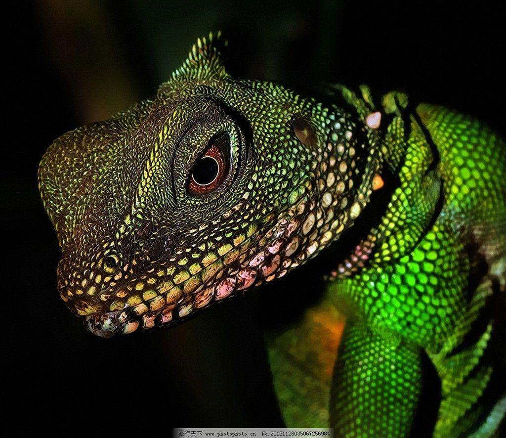 变色龙 濒危野生动物 有益野生动物 珍惜动物 稀有 非人工驯养 野生