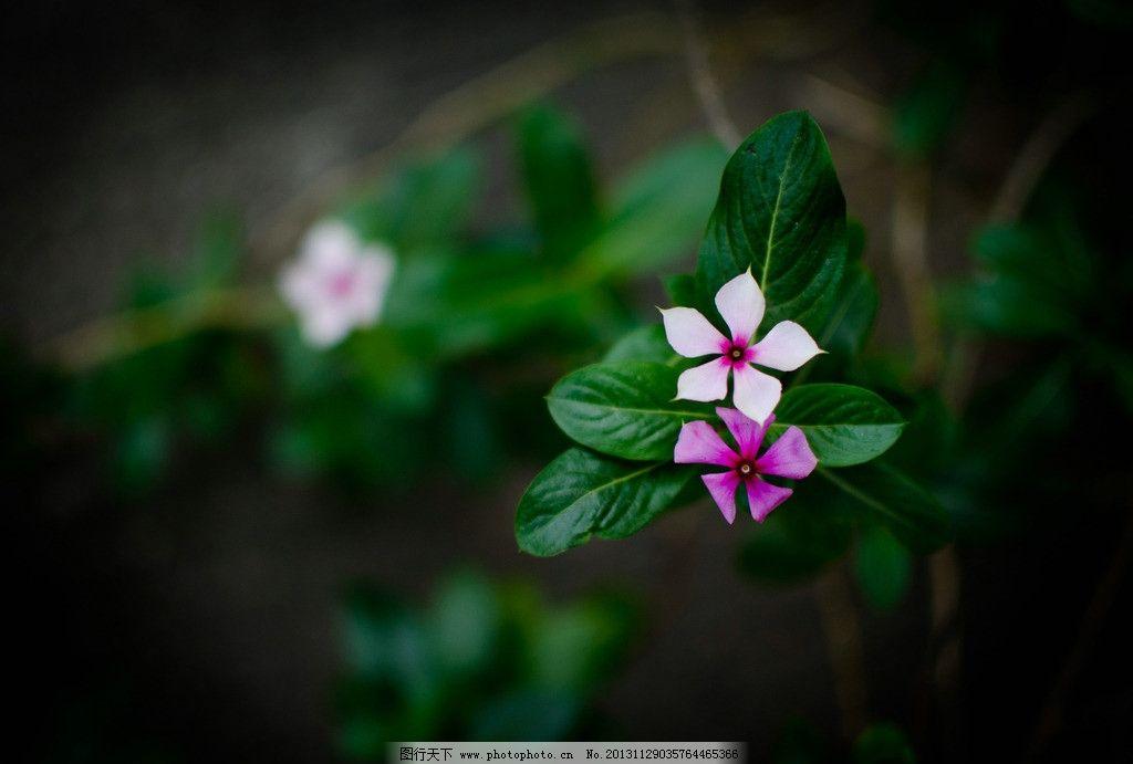花丛 花草图片图片