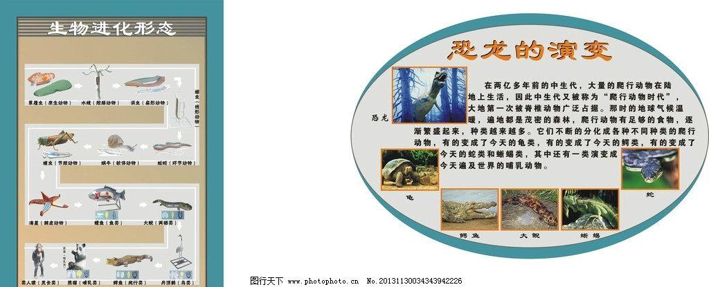 虫 鸟 熊猫 人 爬行 软体 蜗牛 环节 蚯蚓 海星 棘皮 两栖 节肢 腔肠