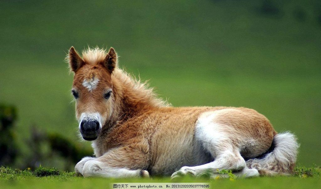 马驹 野生 动物 非人工驯养 濒危野生动物 物种保护 野生动物系列三