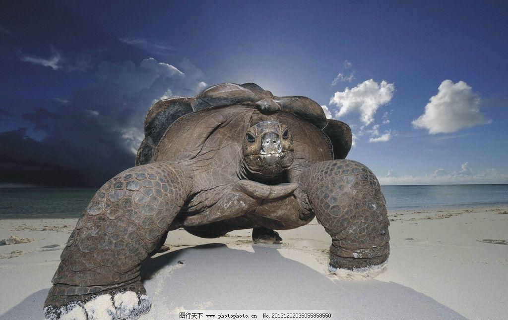乌龟 野生 动物 非人工驯养 濒危野生动物 物种保护 野生动物系列三