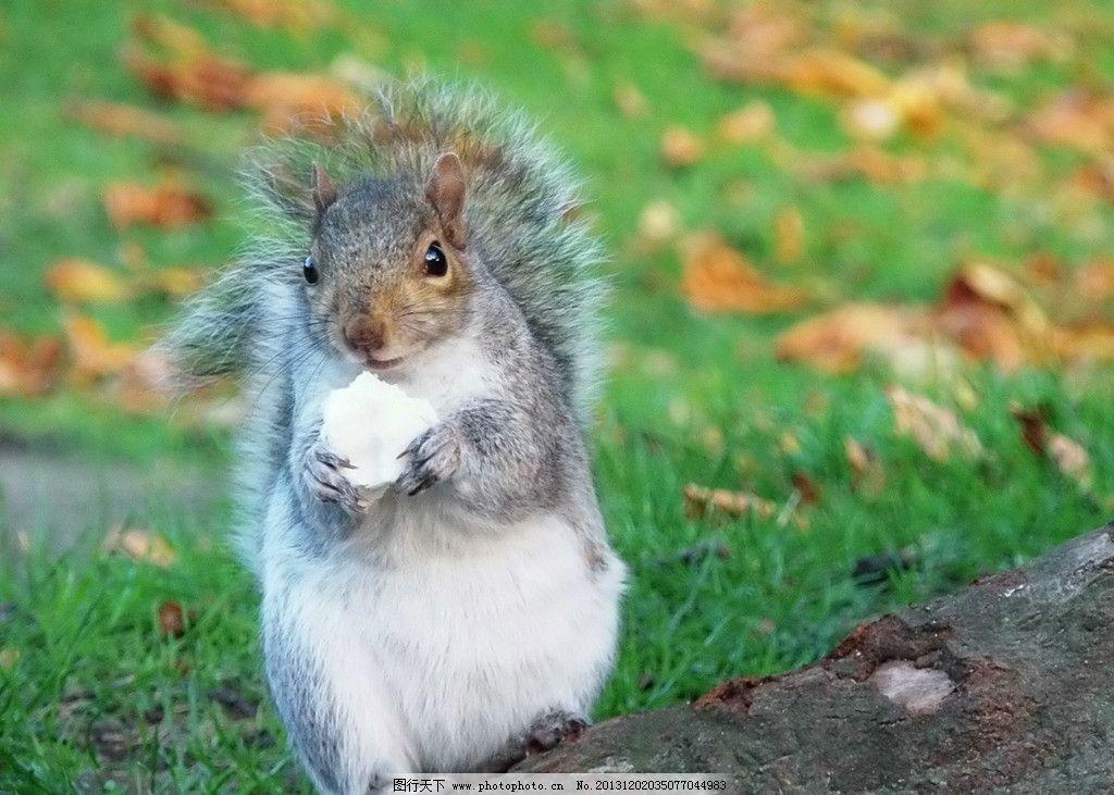松鼠 野生 动物 非人工驯养 濒危野生动物 物种保护 野生动物系列三
