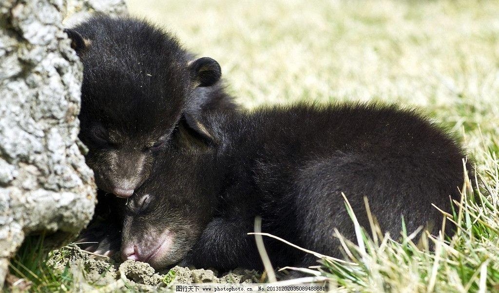 黑熊 野生 动物 非人工驯养 濒危野生动物 物种保护 野生动物系列三