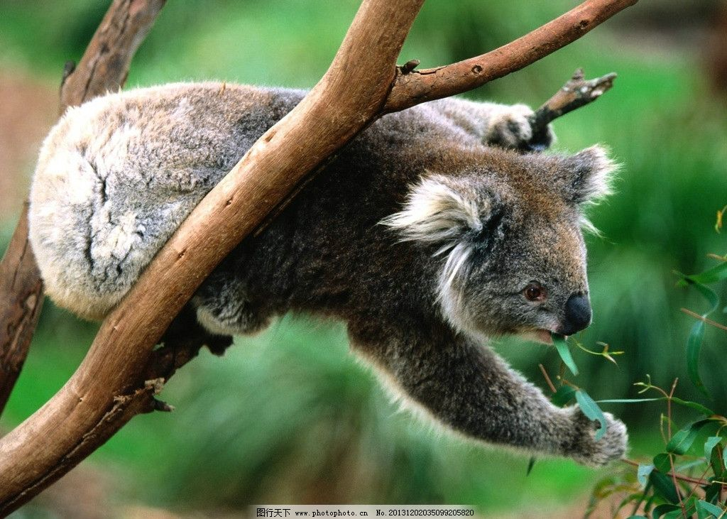 树懒 野生 动物 非人工驯养 濒危野生动物 物种保护 野生动物系列三