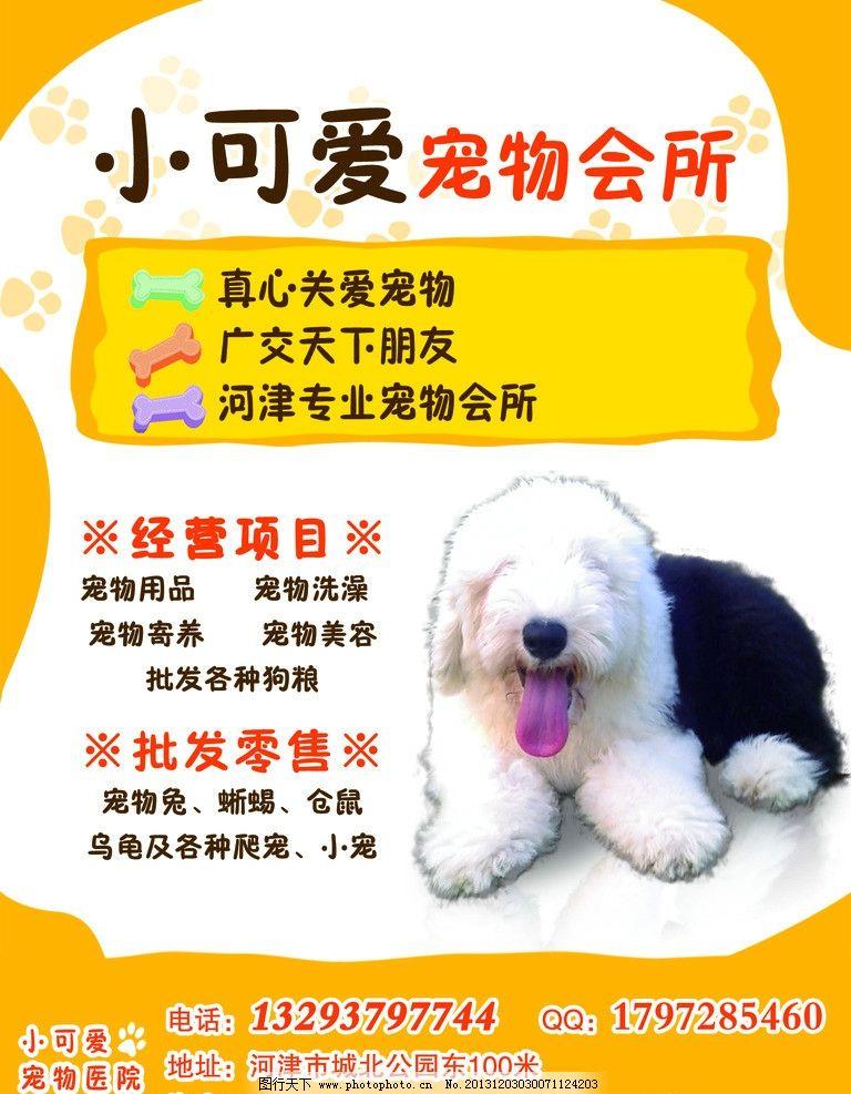 擀面郎小可爱宠物会所 招聘 宠物 可爱 动物 海报设计 广告设计模板