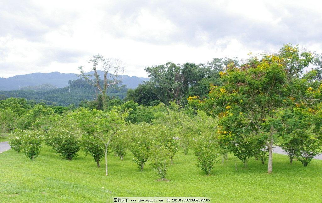 西双版纳 热带植物园 热带植物类 植物园林 热带景观 国内旅游 旅游摄