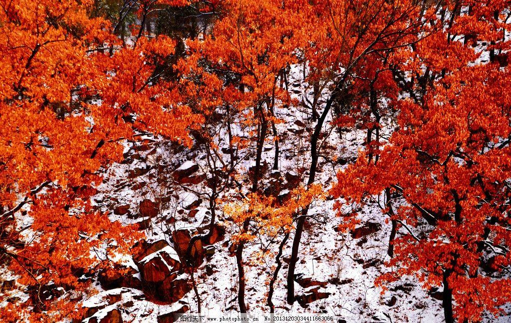 背景 壁纸 枫叶 红枫 绿色 绿叶 树 树叶 植物 桌面 1024_648图片