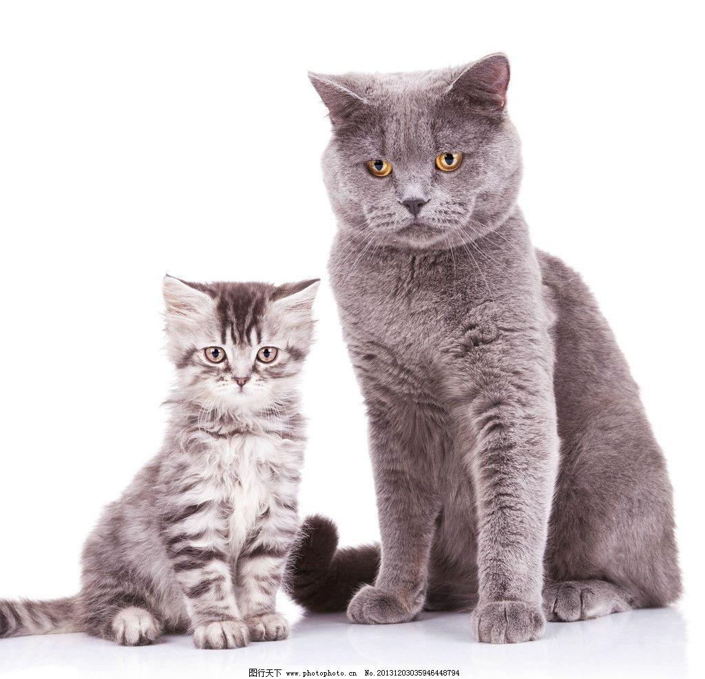 可爱猫咪 猫咪 大猫 小猫 宠物 猫 猫妈妈 猫宝宝 猫宝贝 可爱 家禽