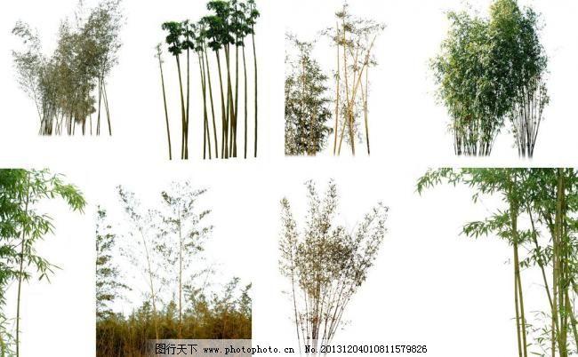 psd psd分层素材 分层素材 环境设计 景观设计 绿叶 素材 小树 竹子