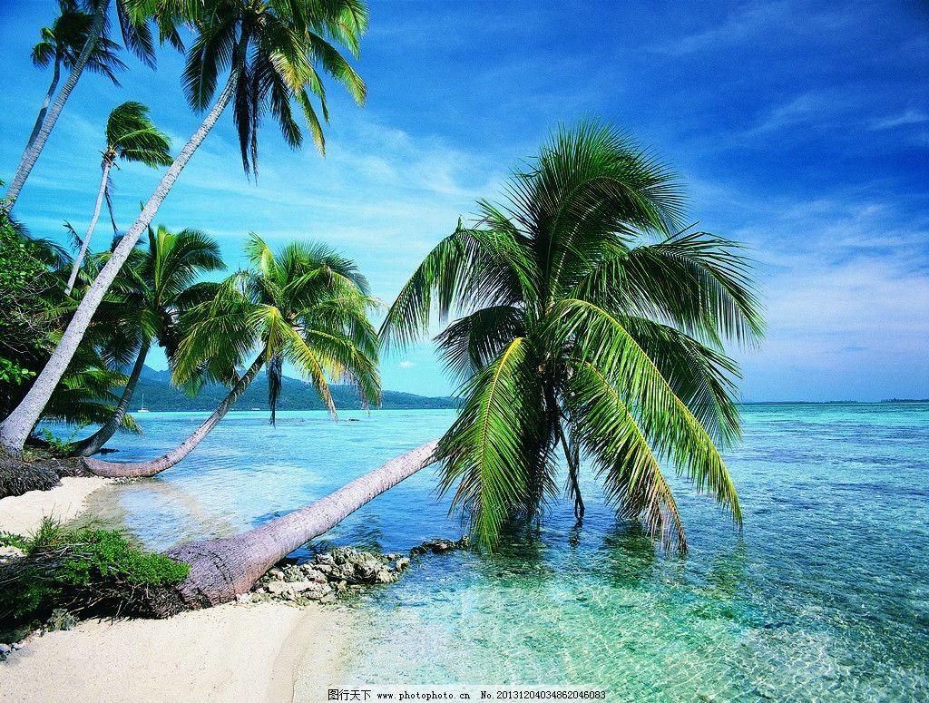 海风椰树 海 椰树 蓝色 海岛 绿 阳光 沙滩 旅游 度假 自然风景 自然