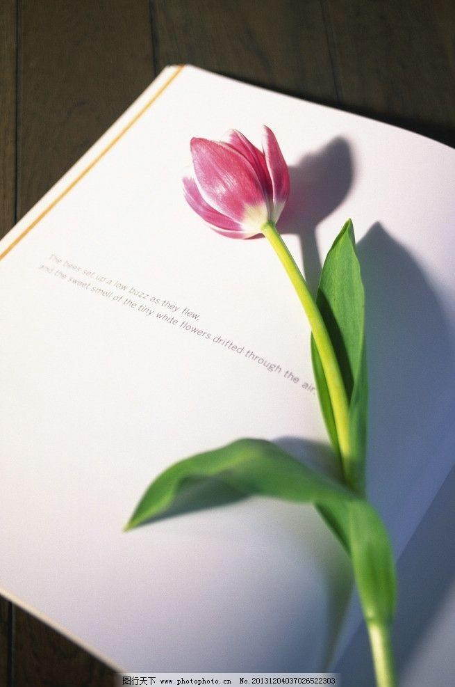 鲜花 植物 花 盆栽 绿植 插花 花艺 书      生活素材 生活百科 摄影图片