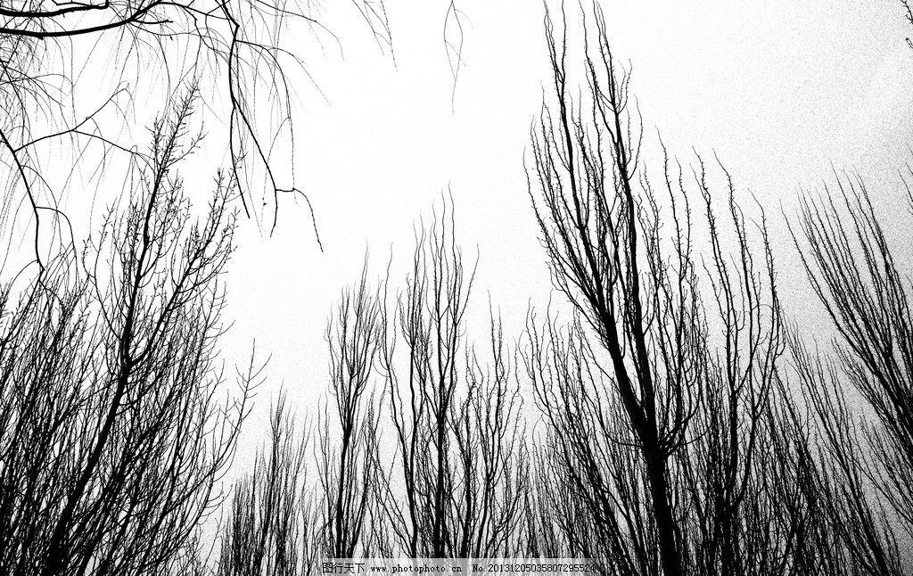 黑白色的树图片