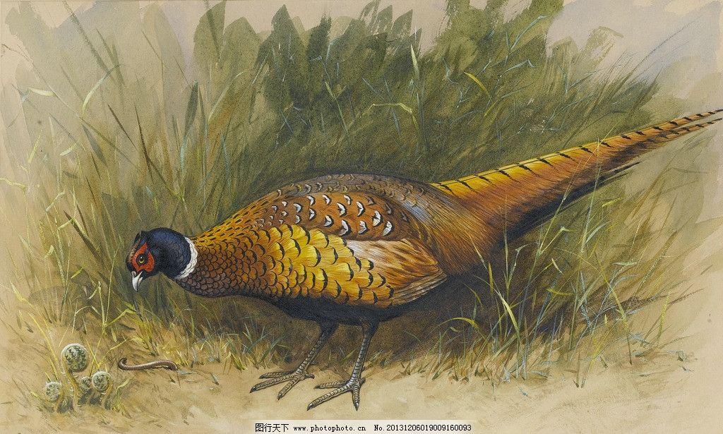 锦鸡 约翰西里尔哈里森作品 动物 鸟儿 觅食 草丛 19世纪油画 油画