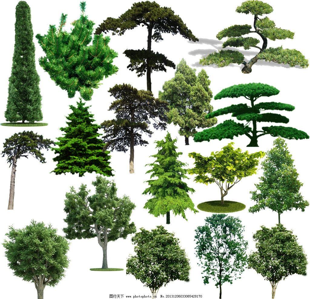 松树简笔画彩色