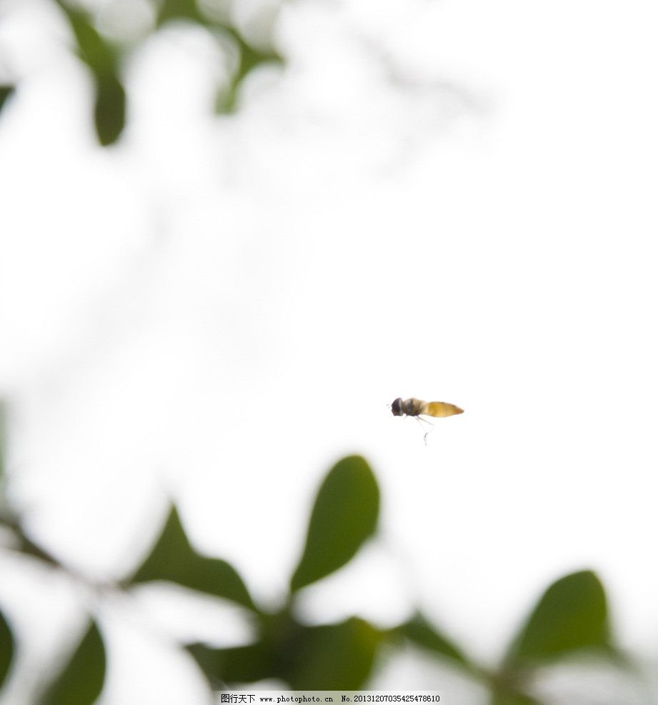 蜜蜂 蜜蜂采蜜 花丛 桃花 枝头 花丛中 忙碌 小蜜蜂 大蜜蜂 飞行 昆虫