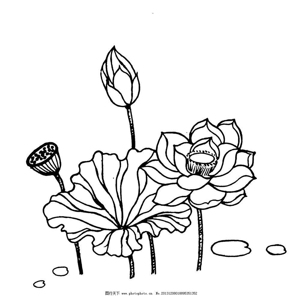 荷花 植物 线描 铅笔画 水生植物 传统文化 文化艺术 设计 72dpi jpg