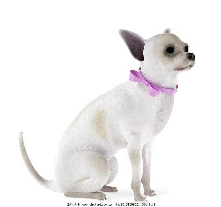 狗 小狗模型 动物图片