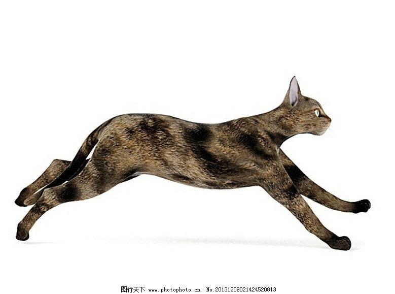 优秀动物贴图 优秀马 狗 鱼 等动物模型 展示模型 3d设计模型 源文件