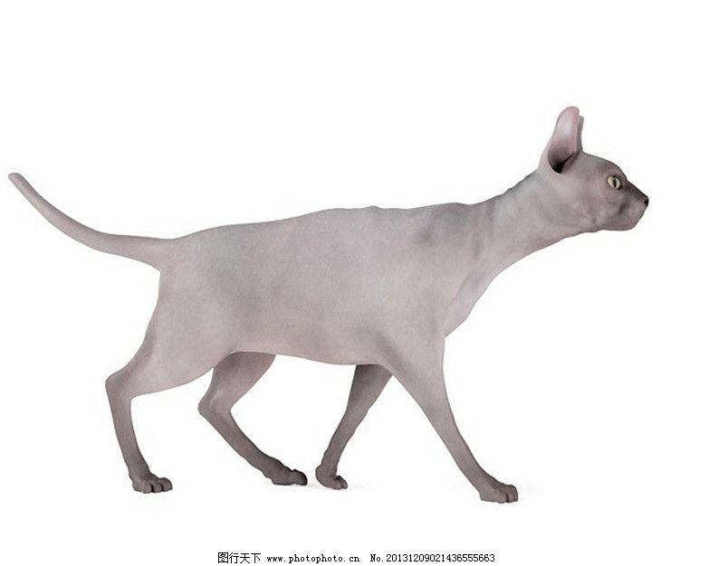 狗 鸽子 马 动物模型 优秀马 鱼 等动物模型 展示模型 3d设计模型 源